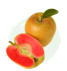 Pacific Rose Apple Taste